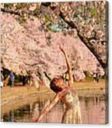 Cherry Blossoms 2013 - 077 Canvas Print