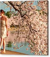 Cherry Blossoms 2013 - 079 Canvas Print