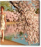 Cherry Blossoms 2013 - 080 Canvas Print