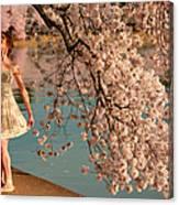 Cherry Blossoms 2013 - 082 Canvas Print