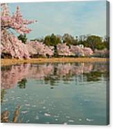 Cherry Blossoms 2013 - 083 Canvas Print