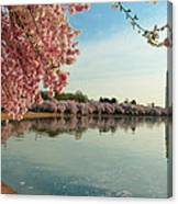 Cherry Blossoms 2013 - 084 Canvas Print