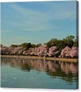 Cherry Blossoms 2013 - 088 Canvas Print