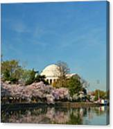 Cherry Blossoms 2013 - 098 Canvas Print