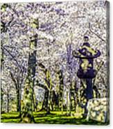 Cherry Blossoms 2014. Canvas Print