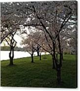 Cherry Blossoms Along The Potomac Canvas Print