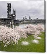 Cherry Blossoms Along Willamette River Canvas Print