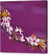 Cherry Blossoms And Plum Door Canvas Print