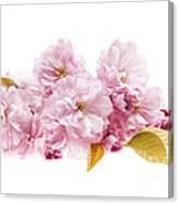 Cherry Blossoms Arrangement Canvas Print