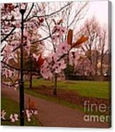 Cherry Blossoms At Kirkland In Kendal Canvas Print