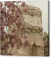 Cherry Blossoms At The Martin Luther King Jr Memorial Canvas Print