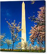 Cherry Blossoms At The Monument Canvas Print