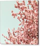 Cherry Blossoms In Spring Canvas Print