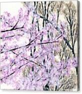 Cherry Blossoms In Spring Snow Canvas Print
