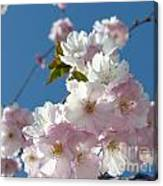 Cherry Blossoms In Spring Xi Canvas Print