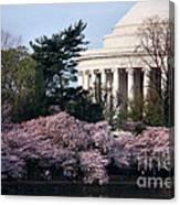 Cherry Blossoms Jefferson Memorial Canvas Print