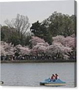 Cherry Blossoms - Washington Dc - 011315 Canvas Print