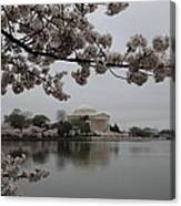 Cherry Blossoms With Jefferson Memorial - Washington Dc - 011343 Canvas Print