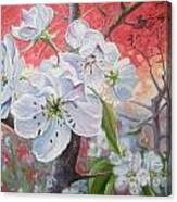Cherry In Blossom Red Canvas Print