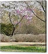 Cherry Lane Series  Picture I Canvas Print