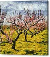 Cherry Trees 3.0 Canvas Print