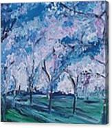 Cherry Trees Impressionism Canvas Print