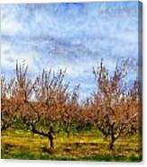 Cherry Trees With Blue Sky Canvas Print
