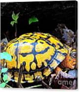 Chesapeake Box Turtle Canvas Print