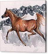 Chestnut Arabian Horse 2014 11 15 Canvas Print