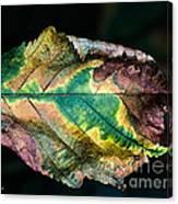 Chestnut Autumn Mosaic Canvas Print