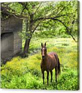 Chestnut Horse In A Sunny Meadow Canvas Print