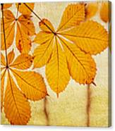 Chestnut Leaves At Autumn Canvas Print