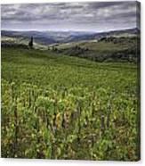 Chianti Region Of Tuscany Canvas Print