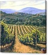 Chianti Vines Canvas Print