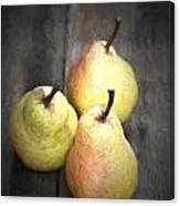 Chiaroscuro Style Image Fresh Juicy Pears In Rustic Wooden Setting Canvas Print