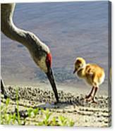 Chick At The Lake Canvas Print