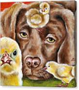 Chick Sitting Afternoon Canvas Print