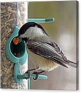 Chickadee And A Big Nut Canvas Print