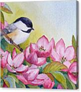 Chickadee And Crabapple Flowers Canvas Print