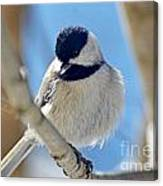 Chickadee On A Bright Day  Canvas Print