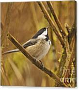 Chickadee On Alert Canvas Print
