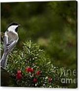 Chickadee Pictures 373 Canvas Print