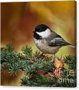 Chickadee Pictures 375 Canvas Print