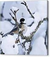 Chickadee Pictures 507 Canvas Print