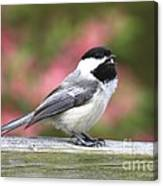 Chickadee Song Canvas Print