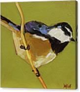 Chickadee V Canvas Print