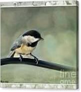 Chickadee With Frame  Canvas Print