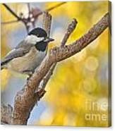 Chickadee With His Prize Canvas Print