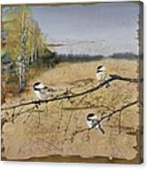 Chickadees And A Row Of Birch Trees Canvas Print