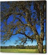 Chickamauga Battlefield Canvas Print